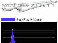 E5 blue pop