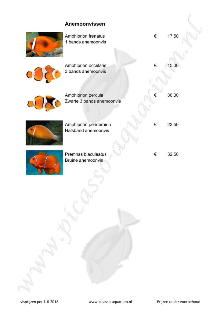 Anemoonvissen
