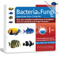 Bacteria & Fungi
