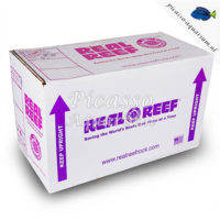 Real Rock Reef box