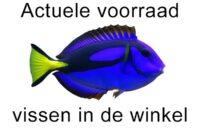 Actuele voorraad vissen