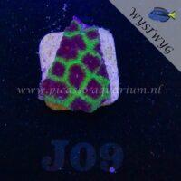 J09 favites